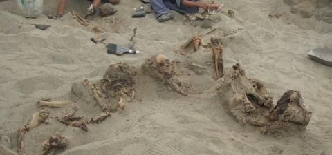 Importante Hallazgo de restos óseos de la cultura Chimú en Huanchaco, La Libertad, Perú