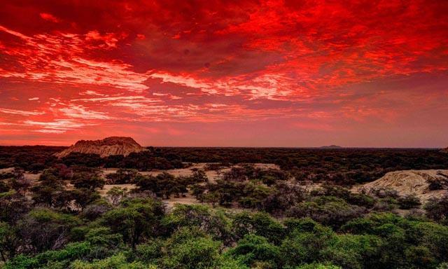 Hoy se recuerda aniversario de recuperación del Santuario histórico Bosque de Pómac
