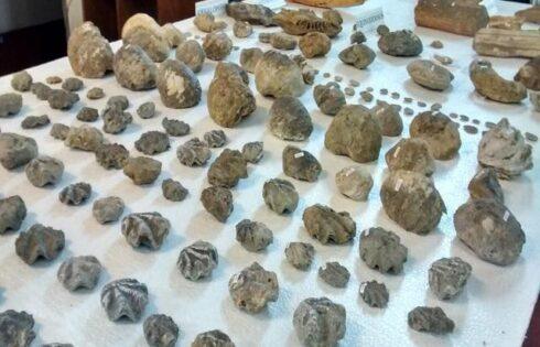 tumbas-reales-paleontologico-donacion