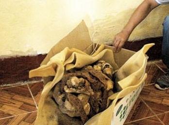 Encuentran momia de cultura Prehispánica en basural